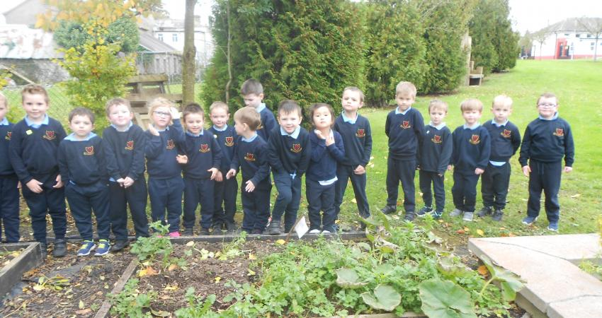 Junior Infants check out the garden.